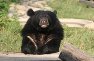 Bosley Bear Congleton's new bear