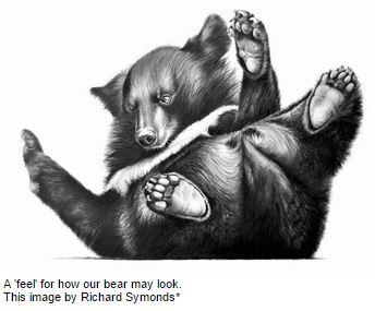 The new Congleton bear