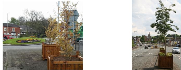 Mountbatten way Congleton planting trees