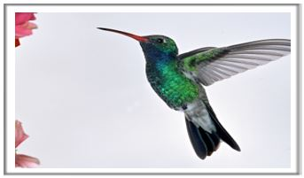 The Hummingbirds sing-a-long…