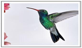The Hummingbirds sing-a-long…
